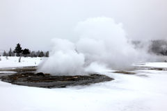 Hot geyser in Yellowstone National  Park, USA Royalty Free Stock Image