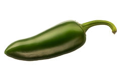 Hot green chili or chilli pepper isolated on white background stock photography