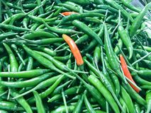 Green chili pepper. Royalty Free Stock Photography