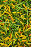 Hot green and yellow peppers Stock Image