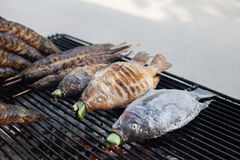 Hot grill fishes such as Catfishes and Nile tilapias on the mesh Royalty Free Stock Images