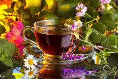 Hot herbal tea Stock Photos
