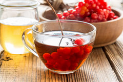 Hot herbal tea with honey and viburnum Stock Photos