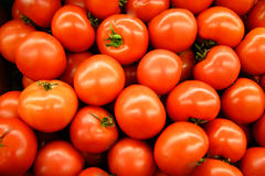 Hot House Tomatoes Royalty Free Stock Photo