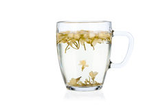 Hot jasmine tea with flowers on white Royalty Free Stock Images