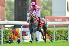 Hot King Prawn. A rampant new star and a returning older one combined in perfect harmony at Sha Tin 18 November as Hot King Prawn and Joao Moreira landed the G2 stock photo