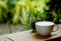 Hot latte coffee with full white foam in withe cup on wooden table with green tropical area garden background Stock Photography