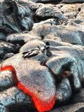 Hot lava. Lava flowing near the hawaiian volcano Stock Images