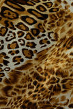 Hot leopard skin seamless background Royalty Free Stock Photography