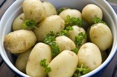 Hot new potatoes stock image