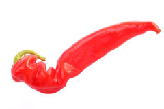 Hot pepper. Pod of bitter red pepper. White background Royalty Free Stock Images