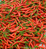Hot Pepper. Nice background with fresh red hot pepper Royalty Free Stock Images