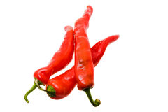 Hot pepper (chili). Combined some pods of red hot pepper (isolated Royalty Free Stock Photos