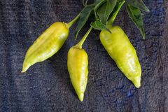 Hot pepper closeup Royalty Free Stock Photography