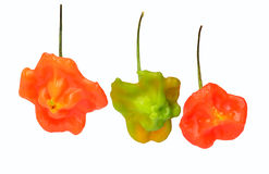 Hot pepper cultivar Stock Images