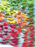 Hot pepper germplasm for organic farming. Germplasm were importance for breeding due to their variation royalty free stock photos