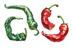 Hot pepper. Hand drawn watercolor painting Royalty Free Stock Photography