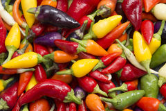 Hot pepper mix Royalty Free Stock Photos