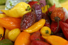 Hot Pepper. Red, orange, yellow, purple hot peppers Royalty Free Stock Photos