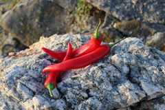 Hot pepper on a rock stock image