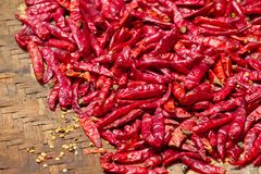 Hot pepper, seasoning, dried in the sun Stock Image