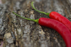 Hot pepper Royalty Free Stock Image