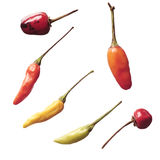 Hot peppers. Different kinds of hot peppers royalty free stock photography
