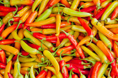 Hot Peppers!. Multicolored hot peppers at a market in Asia Stock Image