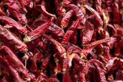 Hot peppers. Strands of dried spicy hot red peppers Royalty Free Stock Images