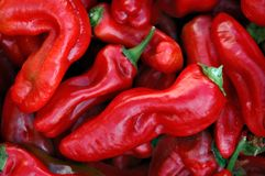 Hot Peppers!. Red peppers at a farmers' market royalty free stock photo
