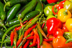 Hot peppers on display ready to use Royalty Free Stock Photography