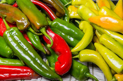 Hot peppers on display ready to use Royalty Free Stock Photos