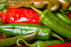 Hot peppers on display ready to use Stock Images