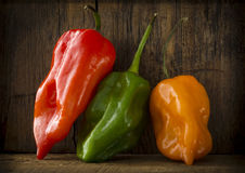 Hot Peppers Hangin Around Stock Photos