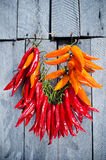 Hot peppers on string Stock Images