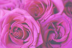 Hot Pink Bouquet Royalty Free Stock Photo