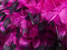 Hot Pink Feathers Detail Stock Images