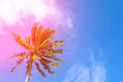 Hot pink flare on coco palm trees. Tropical landscape with palms. Stock Images