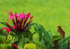 Hot Pink Flower Image stock photos