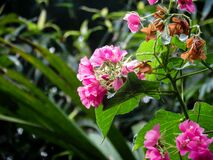 Hot Pink Flowers on Green Plant Stock Image