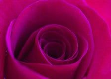 Hot Pink Royalty Free Stock Photos