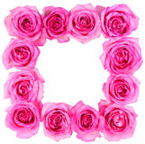 Hot Pink Roses Frame isolated Royalty Free Stock Photography