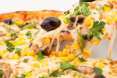 Hot Pizza with melted cheese Royalty Free Stock Photos