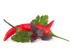 Hot red chili or chilli pepper and aromatic herbs leaves still l Royalty Free Stock Photos