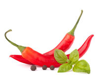 Hot red chili or chilli pepper and basil leaves still life Royalty Free Stock Image