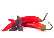 Hot red chili or chilli pepper and basil leaves still life Royalty Free Stock Photo