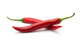 Hot red chili or chilli pepper isolated. Royalty Free Stock Photography