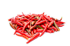 Hot red chili or chilli pepper Royalty Free Stock Photos
