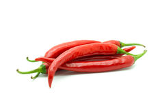 Hot red chili or chilli pepper isolated. Stock Image