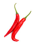 Hot red chili or chilli pepper. Stock Image